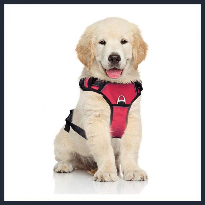 PETDOM Dog Harness