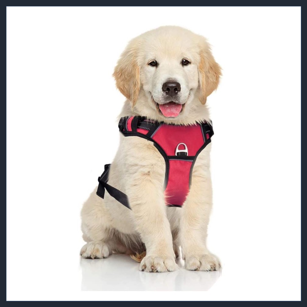 PETDOM Dog Harness